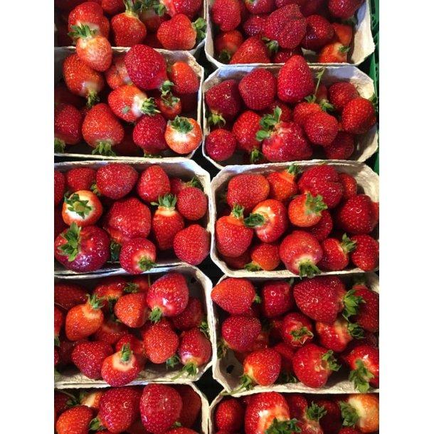 Jordbær - Friske nye danske - Bakker af 500 gr